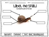 Let's Label the Creatures! Worm-Snail-Fish Labeling Unit