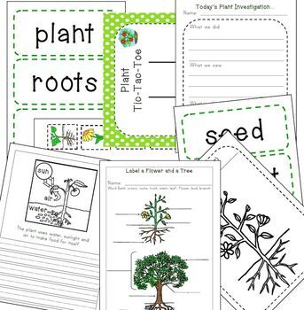 Let's Learn about Plants!