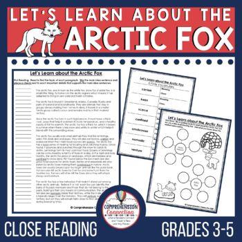 Arctic Fox Close Reading