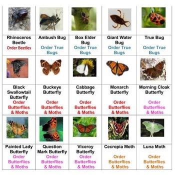 Let's Make a Bug Collection Board Game