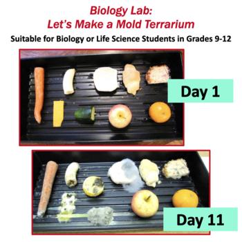 Let's Make a Mold Terrarium!  (Biology Lab on Fungi)