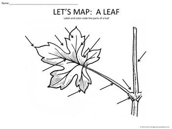 Let's Map: A Leaf