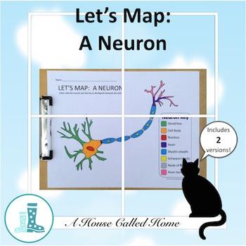 Let's Map: A Neuron