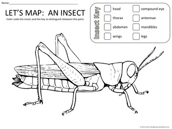 Let's Map:  An Insect