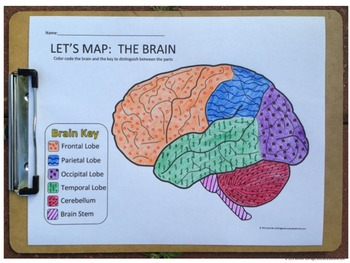 Let's Map: The Brain