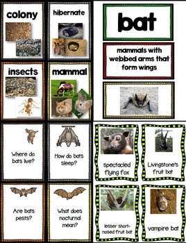 Bats! Let's Take A Closer Look (A Close Reading Unit)