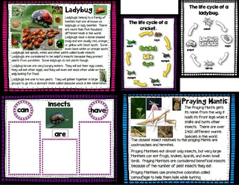 Let's Take a Closer Look: Insects (A K-2 Close Reading Unit)