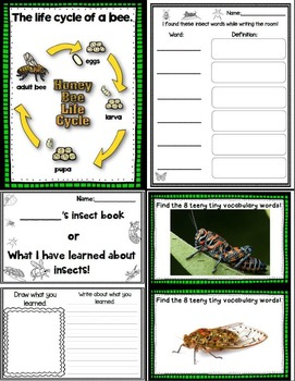 Let's Take a Closer Look: More Insects! (A K-2 Close Reading Unit)