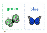 Lets learn about mini beasts and bugs. Teaching pack for p