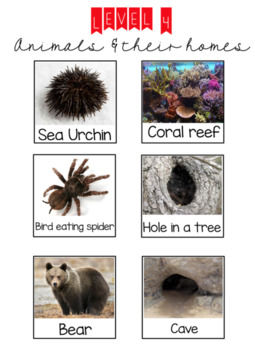 Level 4: Animals and their homes
