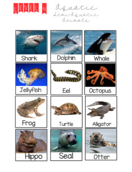 level 4 aquatic and semi aquatic animals by christina s classroom