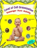 Level of Cell Organization : A Scavenger  Hunt  Activity