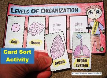 Level of Organization Activities