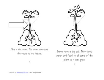Leveled Readers: Plant Life Cycle Unit - Stems