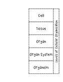 Levels Of Cellular Organization Bundle