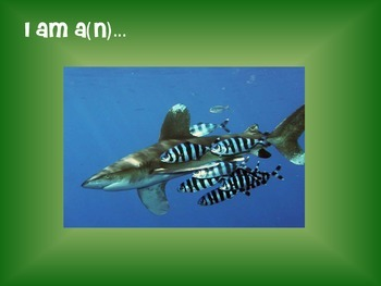 Levels in an Ecosystem Slideshow GAME