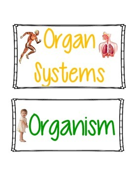 Levels of Organization in the Human Body - Card Sort