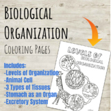 Levels of Biological Organization Coloring Page Series!