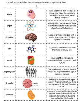 Levels of Biological Organization Cut and Paste Activity