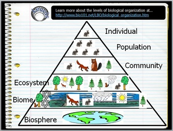 Ecosystems, Levels of Organization Lesson