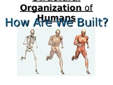 Levels of Biological Organization in Humans