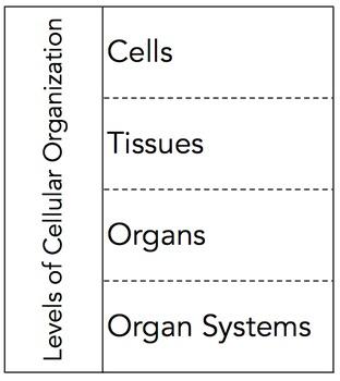 Levels of Cellular Organization Graphic Organizer