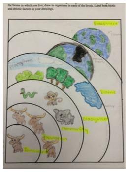 levels of ecological organization worksheet by science rocks tpt. Black Bedroom Furniture Sets. Home Design Ideas