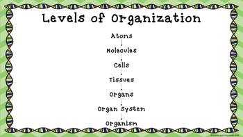 Levels of Organization Bundle