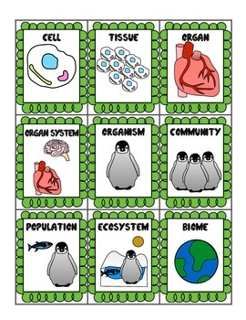 Levels of Organization Card Game