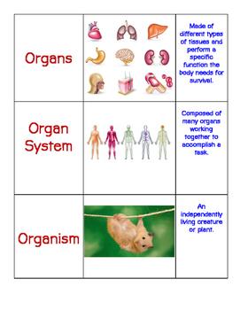 Levels of Organization- Card Sort.