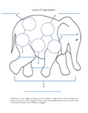 Levels of Organization Elephant