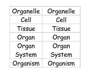 Levels of Organization Math