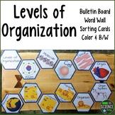 Levels of Organization: Room Decor, Card Sort, Word Wall: Honeycomb Pattern