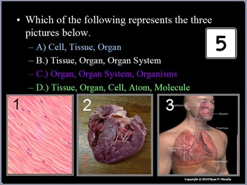 Human Body Quiz Game, Muscular and Skeletal System