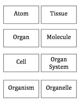 Levels of Organization: Using Microscopes to Examine Cells, Tissues, and Organs