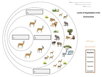 """""""Levels of Organization in the Environment"""" graphic organizer"""