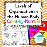 Levels of Organization in the Human Body Color-by-Number