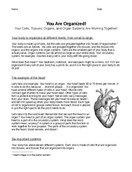 Levels of Organization in the Human Body (Read to learn)