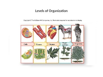 Levels of Organization of Living Things