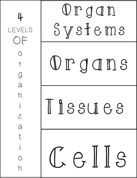 Levels of Organization of the Human Body Foldable