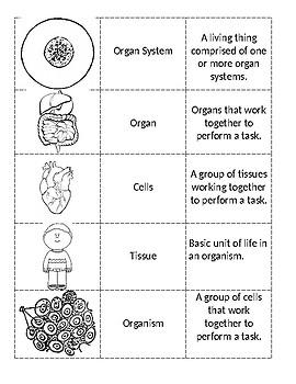 Levels of Organization organizer