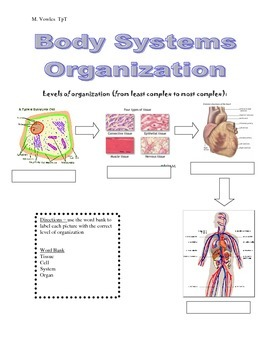 levels of organization cells tissues organs and systems by biochem buff. Black Bedroom Furniture Sets. Home Design Ideas