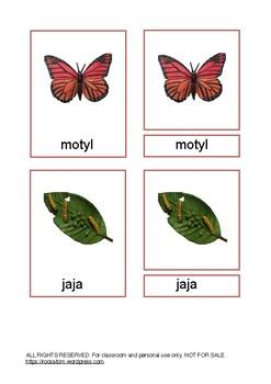 Cykl rozwoju motyla.