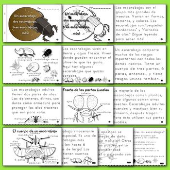Libritos de insectos NO-FICCIÓN ¡Un escarabajo, ... tres escarabajos, más!
