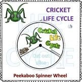 Cricket (Life Cycle Spinner)