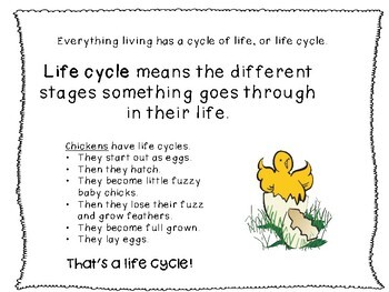 Life Cycle of an Insect, Life Cycle of a Plant, Life Cycle of a Frog