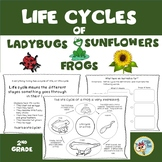 Life Cycle of an Insect, Life Cycle of a Plant, Life Cycle of a Frog,  2nd grade