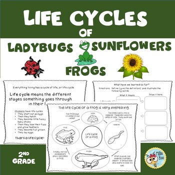 Life Cycle of an Insect, Life Cycle of a Plant, Life Cycle