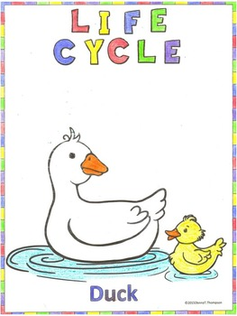 Duck Life Cycle: