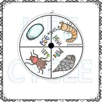 Mealworm Life Cycle (Peekaboo Spinner Wheel)